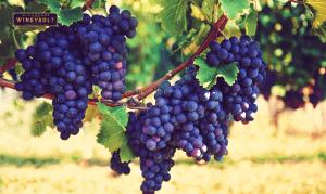 2015 Trends in Wine