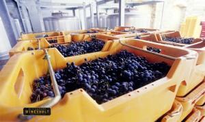 Largest Wine Region 2